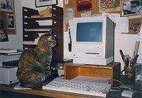 Couscous the cat with a Macintosh computer